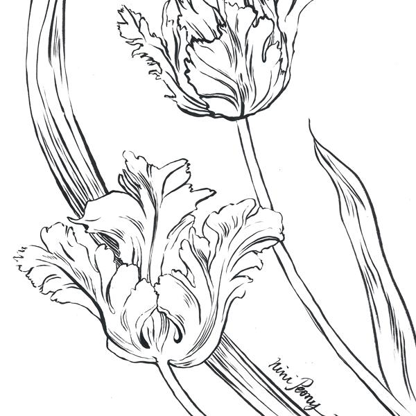 Coloriage Tulipes Perroquet Nini Peony Boutique