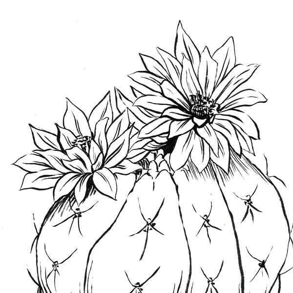 Coloriage Fleur De Cactus Nini Peony Boutique